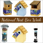 National Nest Box Week: How to get involved