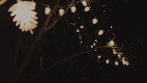 summer lights2