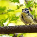 How to Create a Bird Friendly Garden