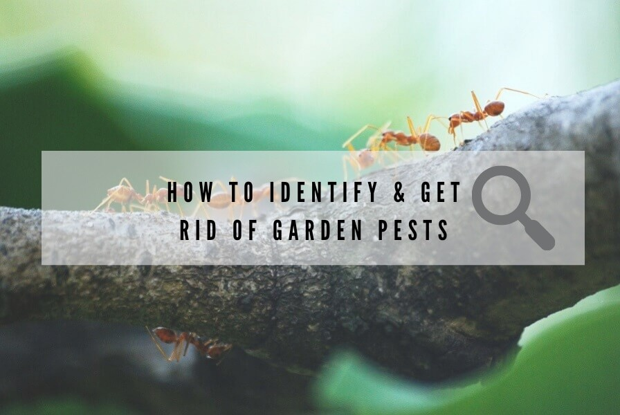 How to Identify and Get Rid of Garden Pests