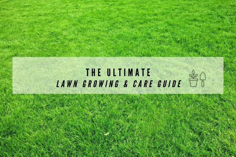 lawn guide