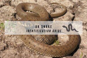 UK Snakes